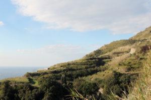 iacono-paesaggio-terrazzato-di-noia