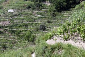 verde-dettaglio-paesaggio-piano-liguori