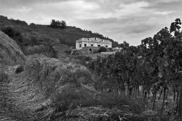 gino-terrazzabn